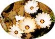 Tankwa Karoo Flowers